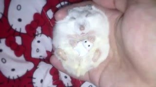 This Tiny Hamster Snoozing With Her Hamsteddy Bear Will Lull You to Sleep
