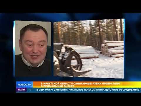 В Иркутской области вскрылись коррупционные схемы с вырубкой леса
