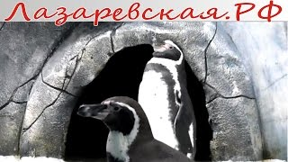 Пингвинарий Океанариума