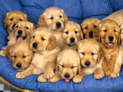 Bilderesultat for Søte hunder