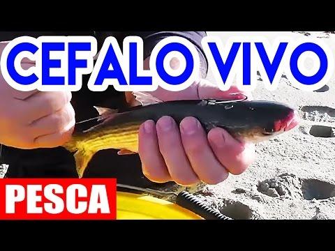 INNESCO del CEFALO VIVO (Surfcasting - pesca in mare)