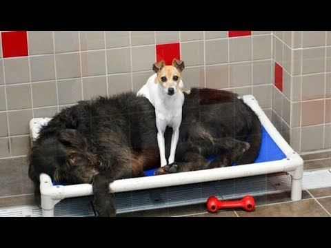 Two Dogs Were Surrendered Because Baby Had Allergies  Now They Can't Stop Cuddling