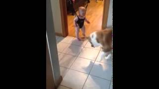 Dog Playing with Baby on a Door Bouncer