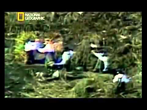 Air Crash Investigation New Series Everglades Plane Crash[Florida everglades plane crash]