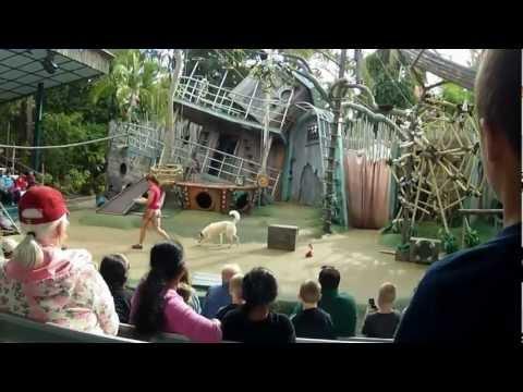 Critter Castaways (Full Show) Busch Gardens Tampa Bay | Animal Talent Show