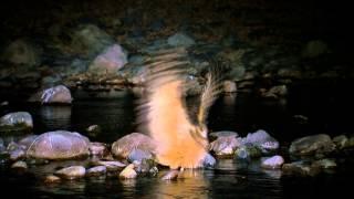暗夜謎禽 黃魚鴞 1分鐘宣傳片