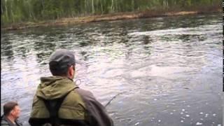 Рыбалка на сёмгу Кольский полуостров.Индель,Пана,Варзуга Индельфиш
