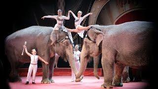 Цирк Триумф. ШОУ гигантских слонов