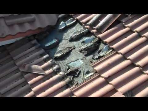 Murcielagos En El Techo Youtube