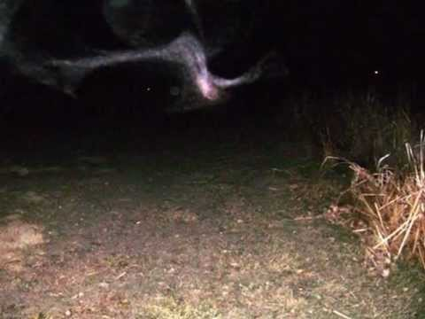 The SpiritChasers Present Haunted Widefield Park