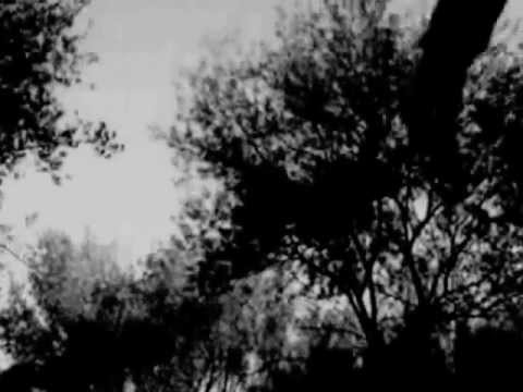 Magpie  Presents : The Europeans   Acid Rain