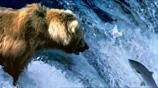 The great salmon run (BBC)