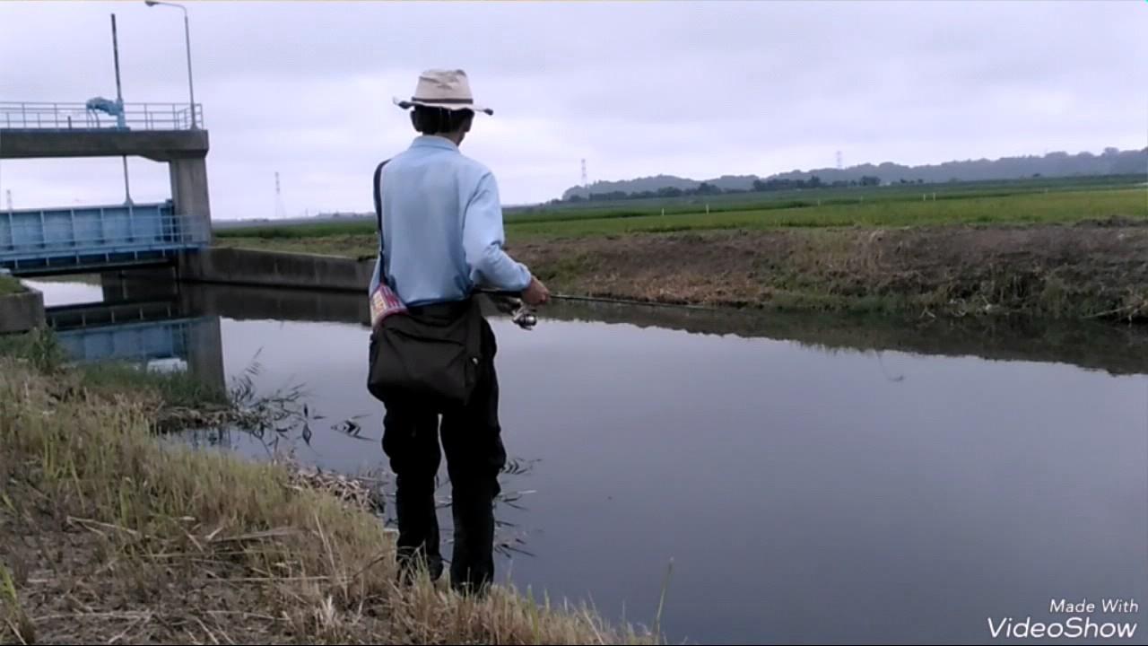 8/4 手賀沼の用水路。現場より。 - YouTube
