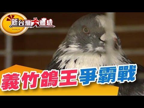 義竹百年鴿王爭霸戰 我是菜鳥王 尋找嘉義職業玩鳥大隊《新台灣大體驗》第188集