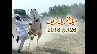 Best horse dance in pakistan No.21
