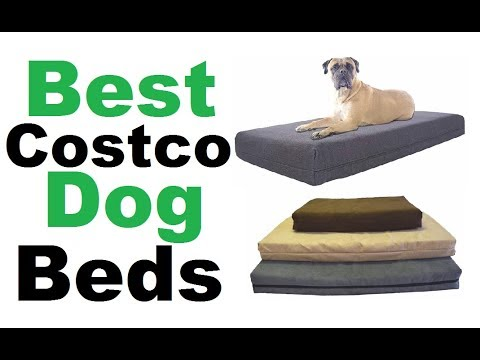 Costco Dog Bed- 5 Best Costco Dog Bed ||