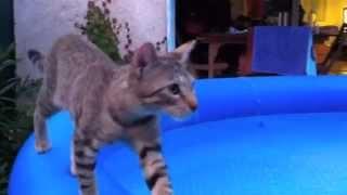 Myiou et la piscine