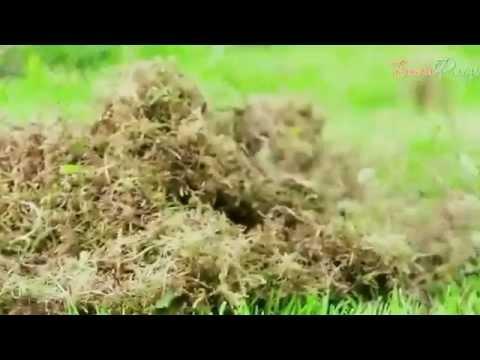 Избавьтесь от мха на газоне