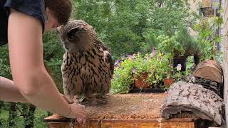 """An owl flew to you!"" and other cleaning surprises on the owl's balcony!"