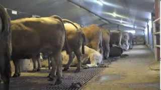 Vêlage au Brouillet - Visite de la ferme - Gîtes des 4 Vents