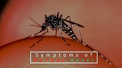 hqdefault - Dengue Fever Symptoms Back Pain