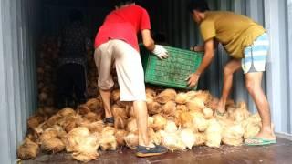 Indonesia Grains Coconut, Indonesia White Copra, Indonesia Dry Copra, indo Coconut Shell Charcoal