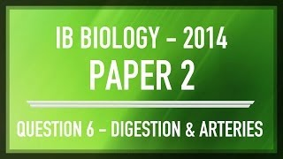 question 6 ib sl biology past paper 2 section b digestion arteries