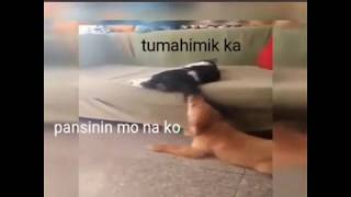 Funny animals tagalog dubbed