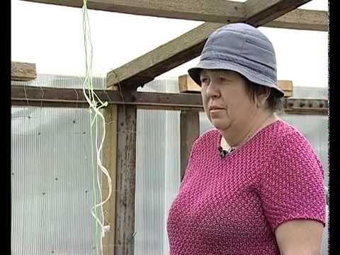 видео: Подвязка огурцов в теплице -  уДачные советы.mp4