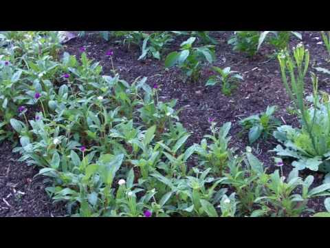 Acres of Organic Gardening