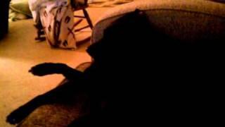 Belle Dog Snoring
