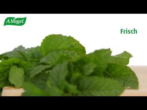 A.Vogel: Natürliche Heil- und Lebensmittel mit frischen Pflanzen