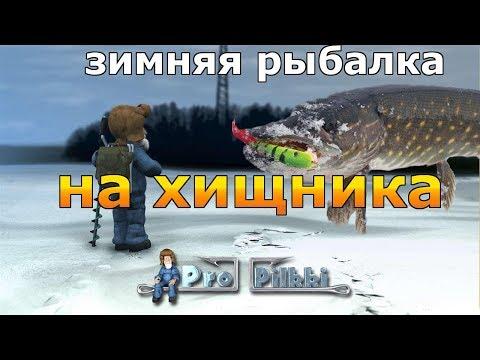 ЗИМНЯЯ РЫБАЛКА НА ХИЩНИКА - Pro Pilkki 2