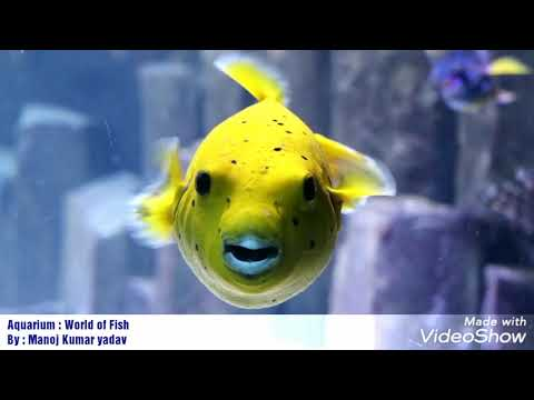 Aquarium Berlin : World of Fish 🐠 || Berlin Zoo || Most Beautiful fishes from all over the world