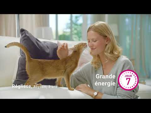PURINA ONE® - Le Programme 21 Jours PURINA ONE® 20s Pub TV