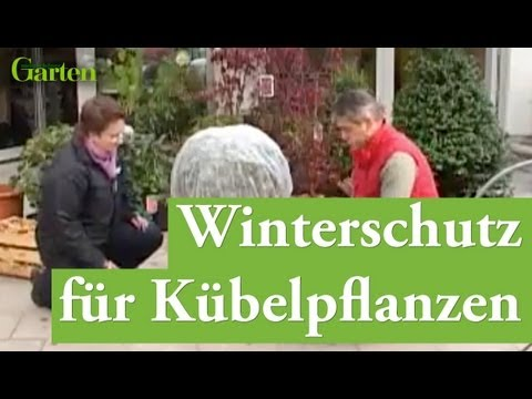 pflanzenschutz winterschutz f r frostharte k belpflanzen youtube. Black Bedroom Furniture Sets. Home Design Ideas
