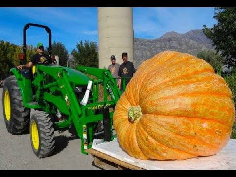 18 Giant Fruits and Vegetables You Won't Believe