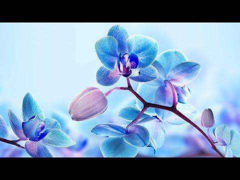 Релакс видео Орхидея HD - музыка для релакса. Relaxing video Orchid HD - Music for relaxation