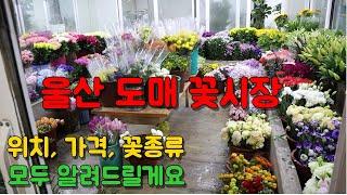 울산꽃시장 직접가봤어요! 도매 꽃가격 위치 꽃종류!