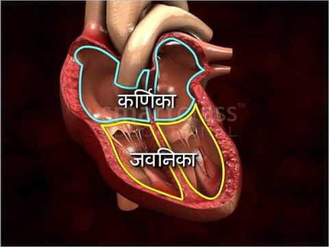 The human heart marathi youtube the human heart marathi ccuart Choice Image
