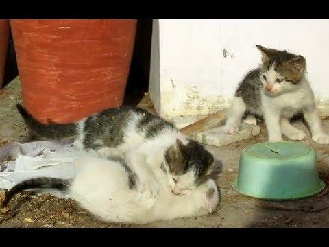 Cat kittens EPIC INTENSE fighting !!