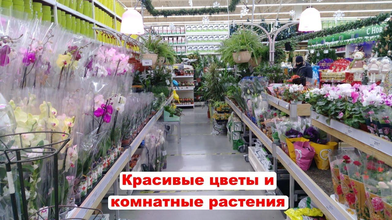 Комнатные цветы и комнатные растения в магазине Леруа Мерлен. Обзор ассортимента цветов Ноябрь 2020