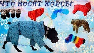 Собака Кане корсо Деррек и его одежда. #canecorso