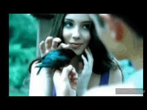 Black Bird Tribute
