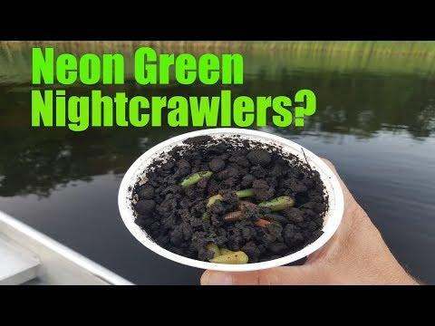 Fishing With Neon Green Nightcrawlers?
