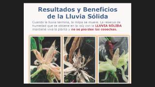 De líquida a sólida | Sergio Rico | TEDxCondesaRoma