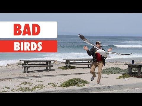 Bad Birds