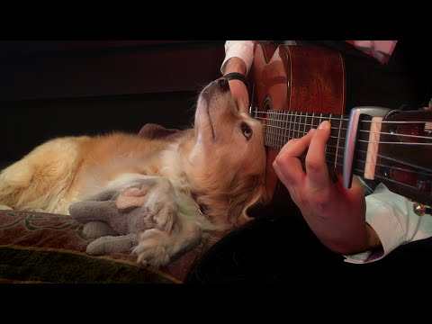 Scott - WATCH: Man plays guitar for his adorable pup