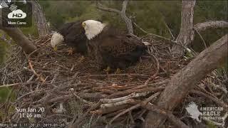 Morning A2 and Young Mature Eagle - Jan 20, 2019 - NEFL Bald Eagles