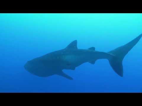 Океаны мира и материки нашей планеты  Документальный фильм на русском 2020 BBC KSN Animal Planet